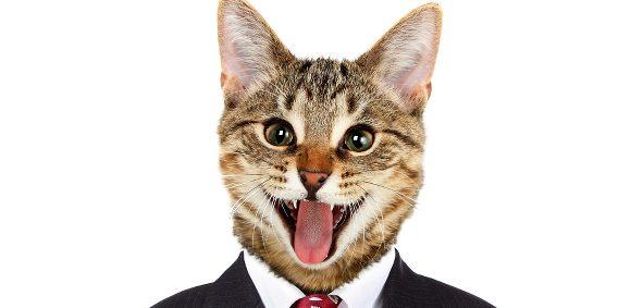 かわいい猫画像に癒されたい人、全員集合!!