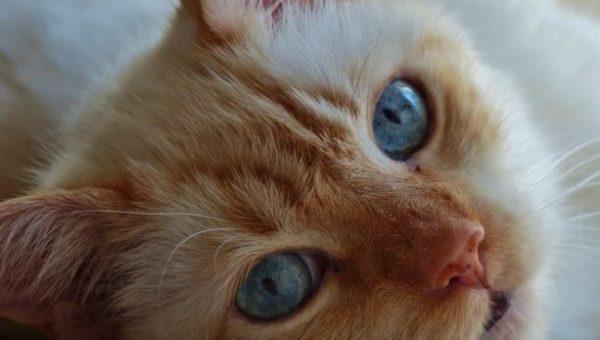 猫が噛む理由とその5つの対処法