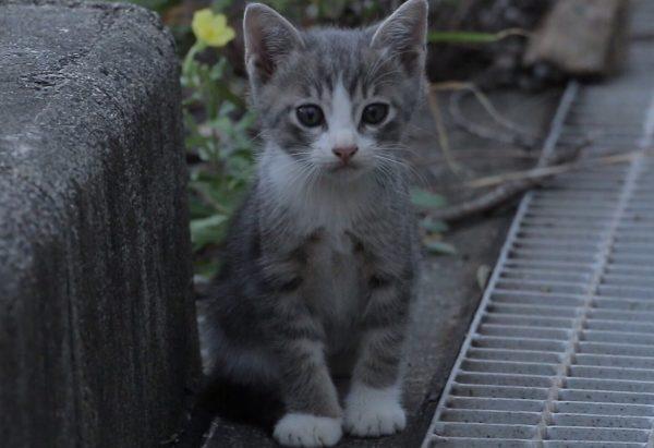 野良猫が保護されたらどうなる? その実態に迫る!