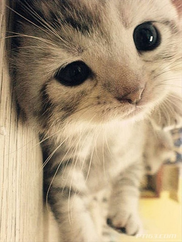 猫の甘えん坊の姿をベストショットした画像集