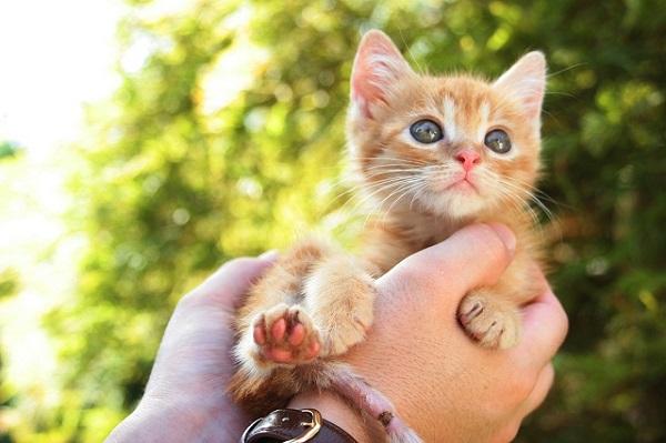 猫の癒しが