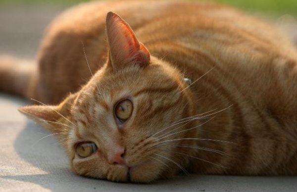 老猫と一緒に暮らす時の7つの配慮