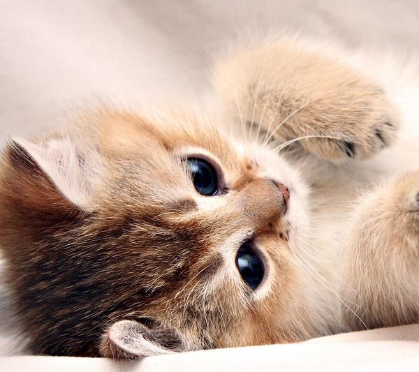 猫嫌いを黙らせる