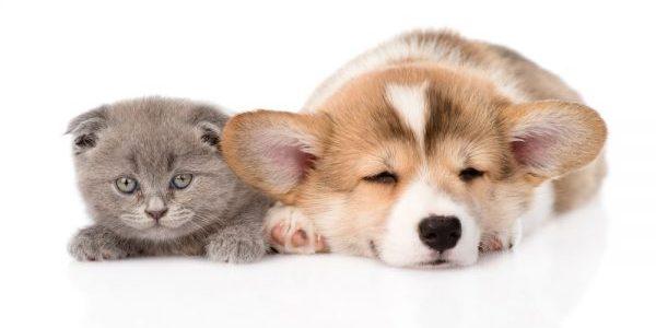 ペットショップの売れ残り犬猫ちゃんを飼うメリット