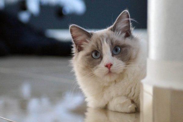 大型猫好きのための特選7画像