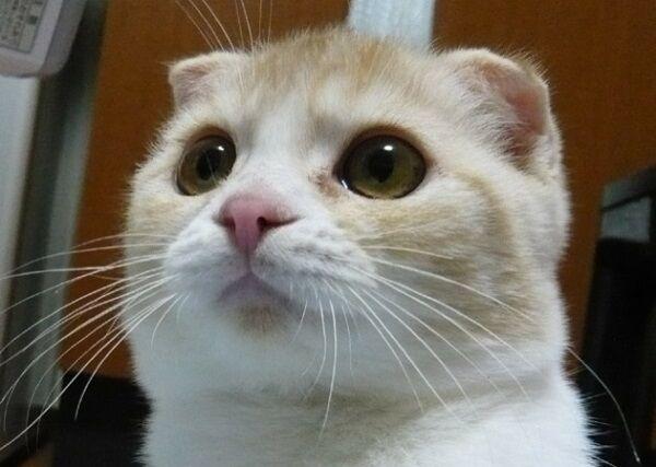 甘えん坊の猫の特選7画像!!