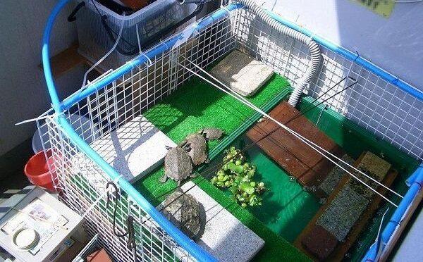 亀の飼い方と餌の与え方