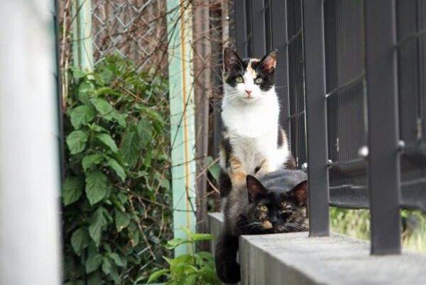 三毛猫の性格が表れている画像7選